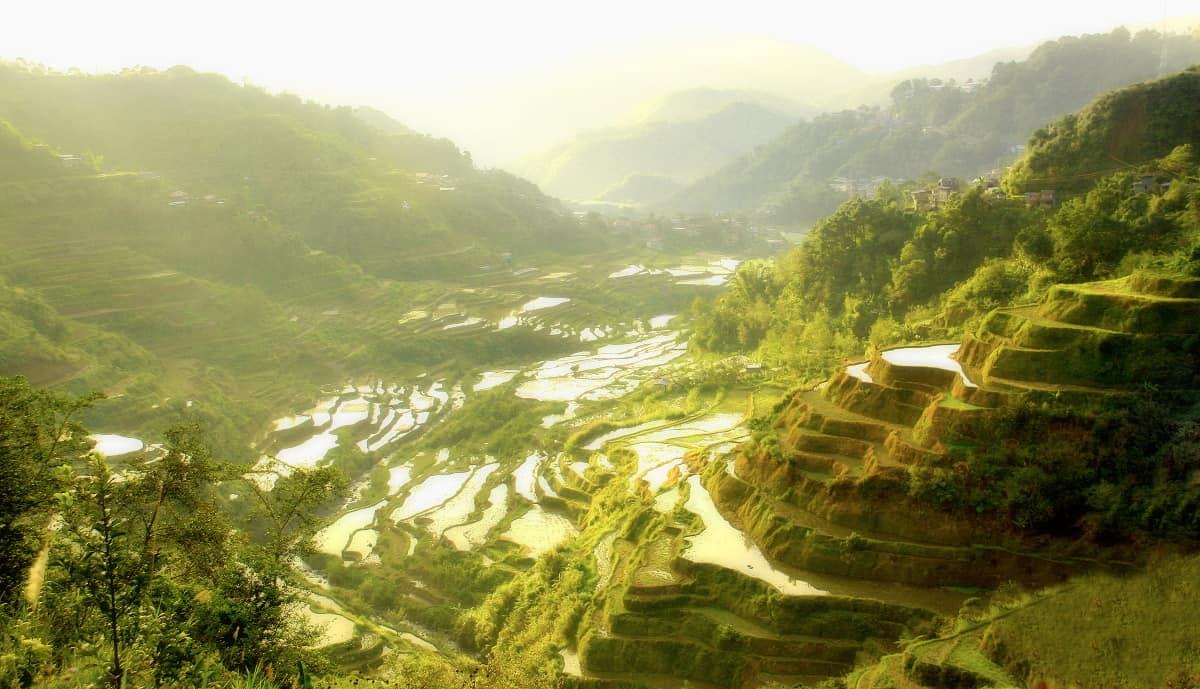 טרסות האורז של איפוגאו