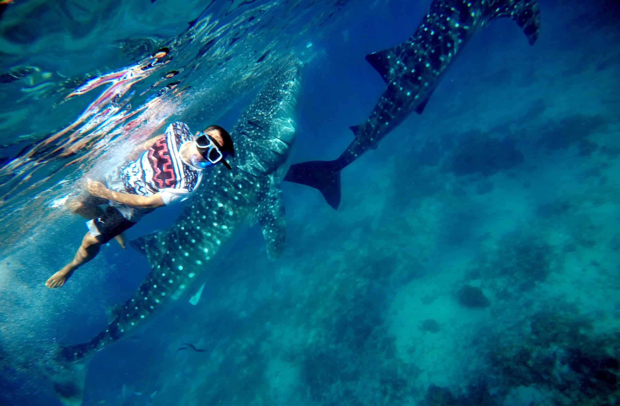 צלילה עם כרישי לוויתן וקפיצה מצוקי קאוואסאן